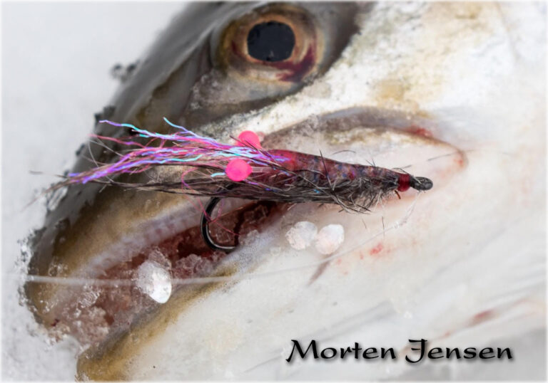 morten-jensen-shrimp-seatrout-pink-eyes