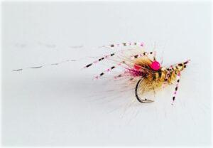 shrimp-easy-shrimp-legs-2-erik-petersen